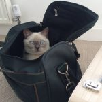 Moving with your pets abroad