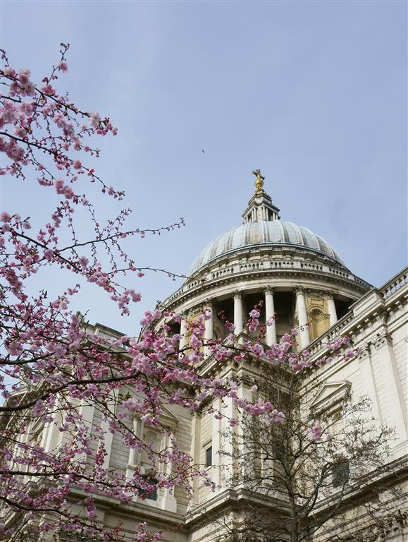 Spring in London with cherry blossom trees at St Pauls